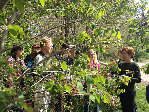 Leda Meredith's Foraging Tour in Prospect Park