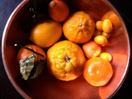 Citrus-palooza